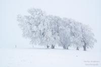 Schauinsland Winter (109 von 150)
