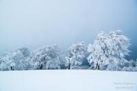 Schauinsland Winter (53 von 150)