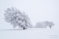 Schauinsland Winter (9 von 11)