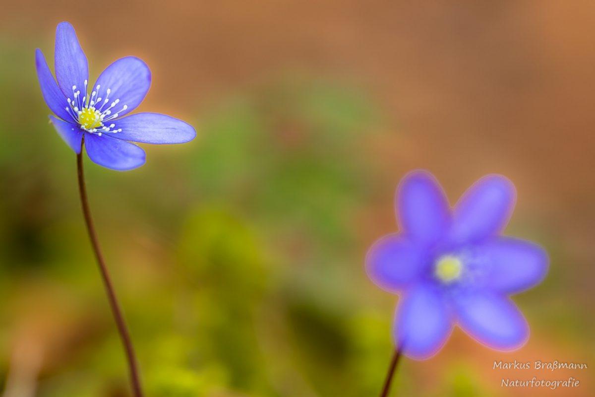 Frühling in den Wutachflühen